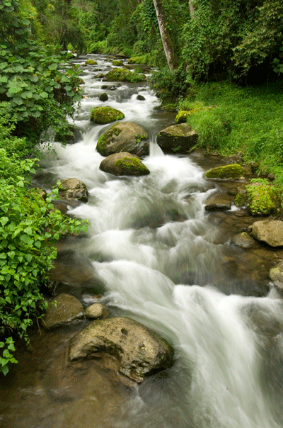 stream green community costa rica